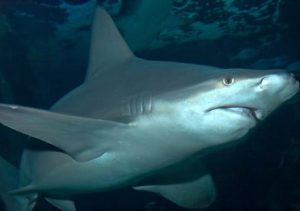 Shark At Sea Life centre