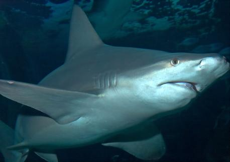 Shark At Sea Life centre